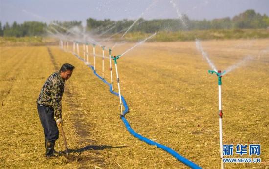 (经济)(2)河北深州:用好闲置土地 促进农民增收