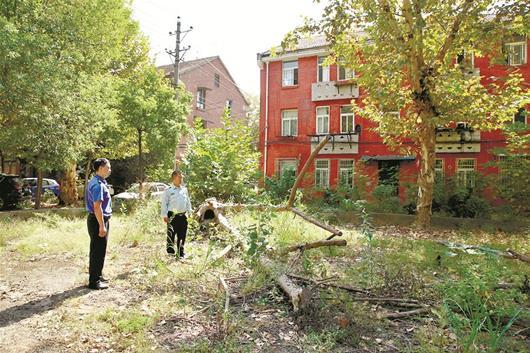 一伙人身穿绿马甲大摇大摆到小区砍树 一查竟是盗伐