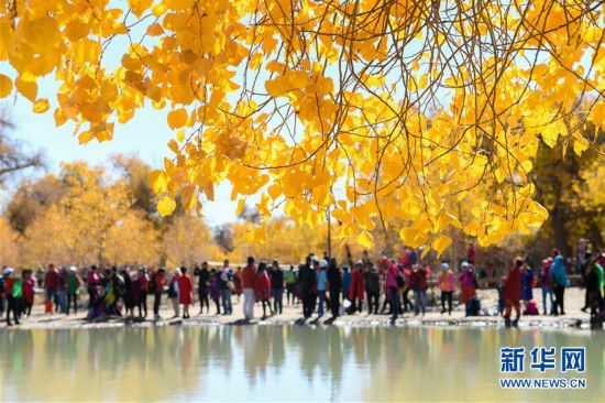 内蒙古自治区额济纳旗胡杨林披上金装