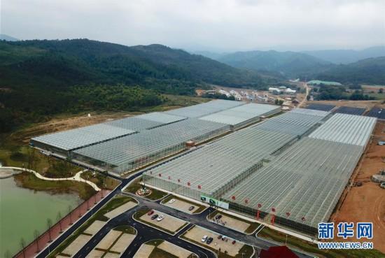 (脱贫攻坚)(1)江西全南:高山蔬菜田园综合体助力脱贫攻坚