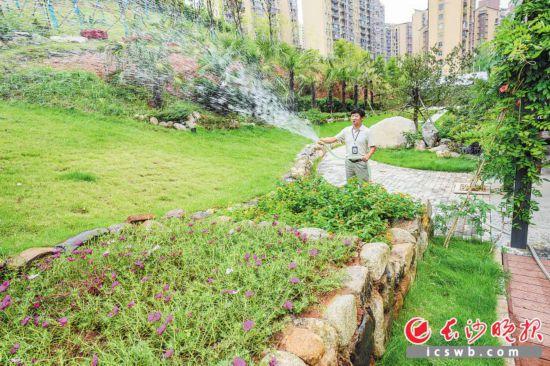 长沙:居民众筹,荒坡变美丽花园