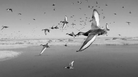 新疆塔里木河飞鸟成群