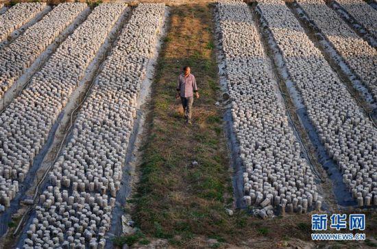 (经济)(4)陕西洛川:林下经济 助农增收
