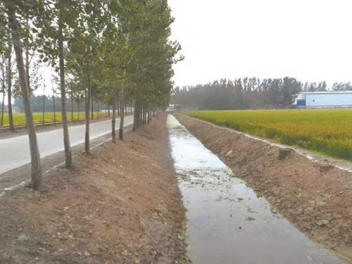 沛县龙固镇:治理结合 塑造美丽乡村新空间