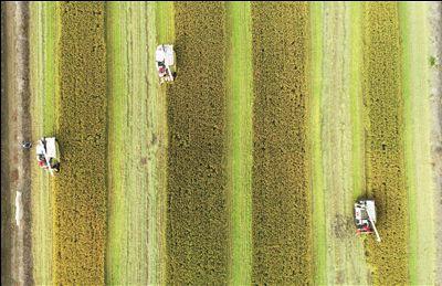 南通海安市大公镇举办首届水稻机收比赛