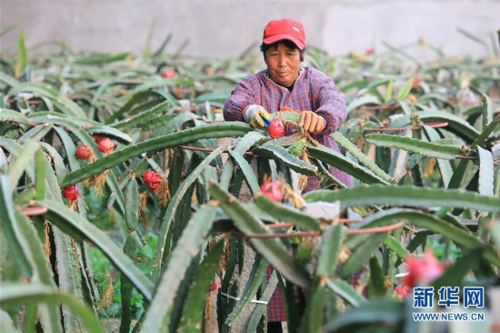 (经济)(1)河北平山:农业园区助力脱贫致富