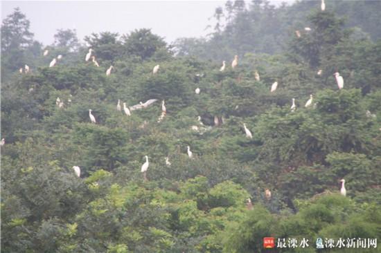 南京晶桥镇彻底关闭化工园区 全面重塑健康环境