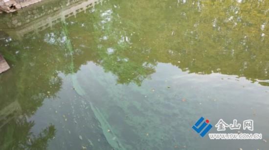 国家5A风景区镇江焦山:放生池一池绿水似颜料