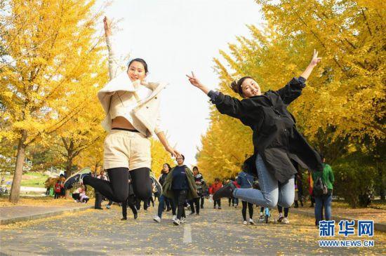 (社会)(1)金秋银杏引游人