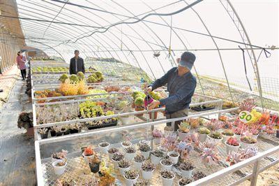 鲜花经济带动致富