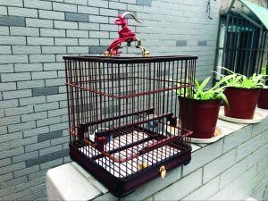 南京一老人偷鸟换笼 不知鸟笼值6000多元