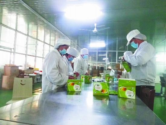 沛县袁圩子村发展牛蒡规模种植 农民抱团致富