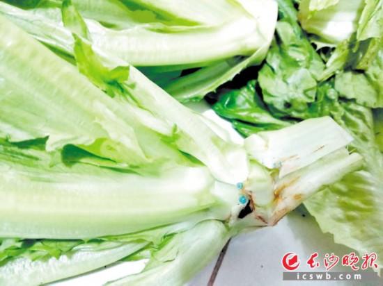 记者在某超市购买的油麦菜,发现其根部有蓝色颗粒物。  长沙晚报记者 徐运源 摄