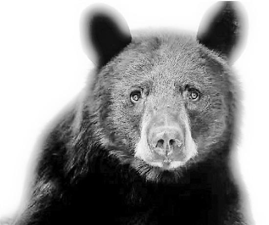 阿拉斯加州的一名妇女被熊袭击