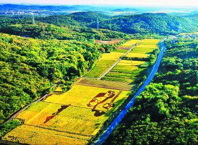 南京溧水晶桥现彩色水稻大地景观 成靓丽风景线