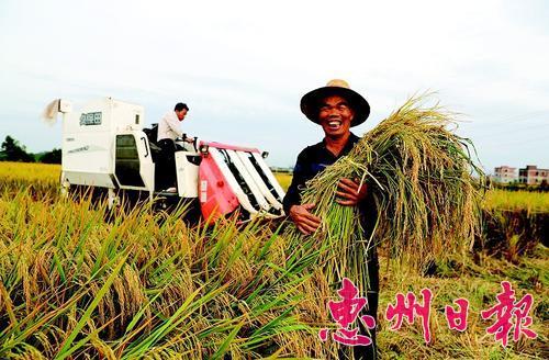 惠州:丰收的喜悦