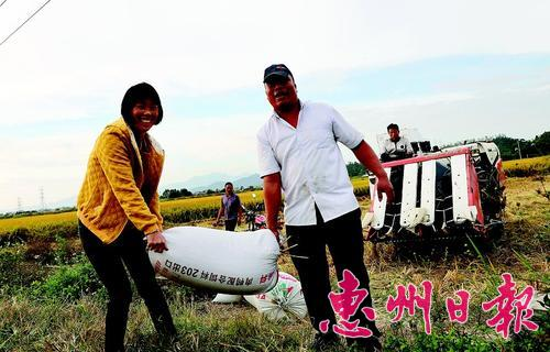 惠城区汝湖镇围仔村农民刘国和夫妻忙着收割。