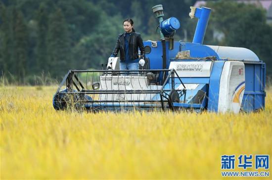 (图片故事)(1)吉根兰的田园产业梦