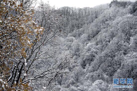 (美丽中国)(6)秦岭初雪
