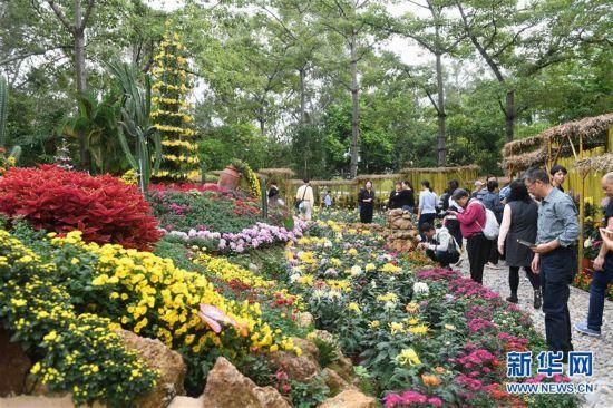 福建:金秋菊展喜迎八方游客