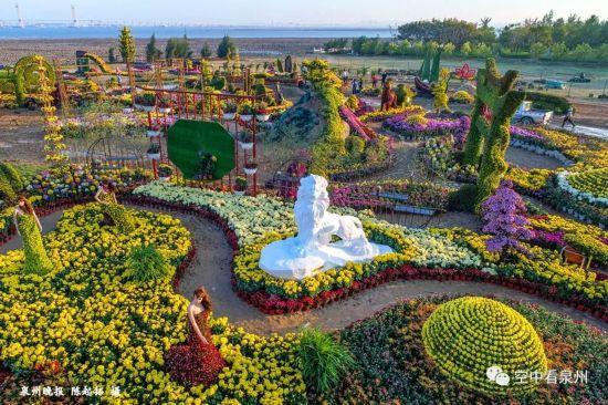 美爆了!近30万盆菊花扮靓滨海公园 一大波高清美图来袭