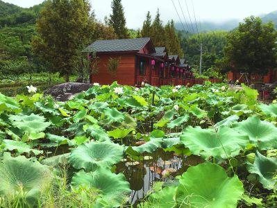 池塘被誉为乡村的眼睛,在乡村随处可见.图片