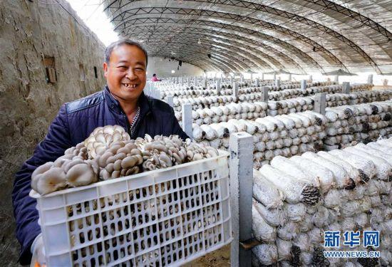 (社会)(2)河北滦南:食用菌培育富农家