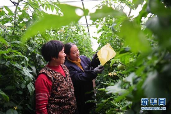 (社会)(1)河北乐亭:多措并举筑牢农产品质量安全防线