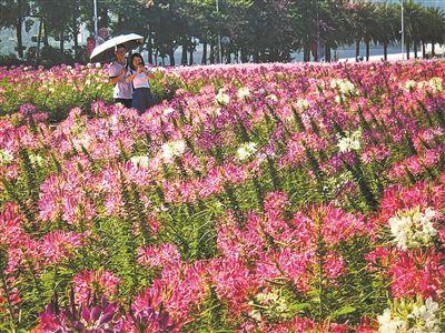 廣州:年年紅妝迎冬來