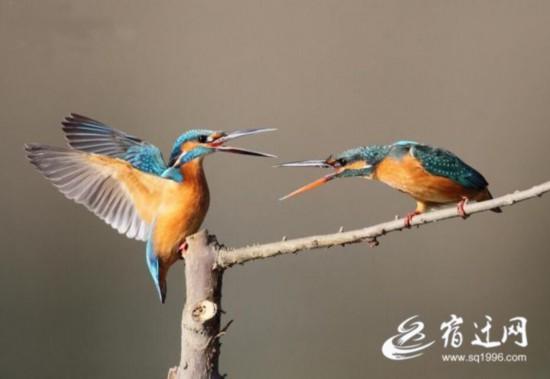 今年首批越冬候鸟抵达洪泽湖湿地