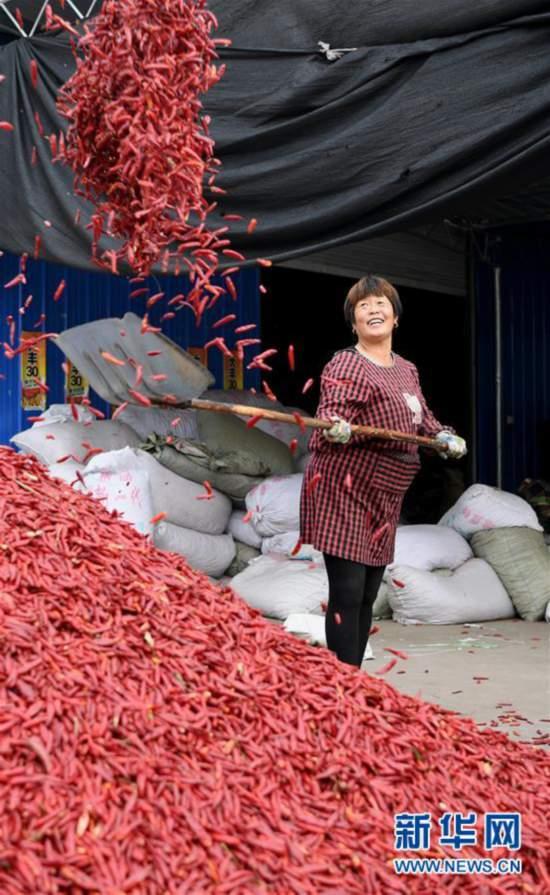 (经济)(1)山西襄汾:红了辣椒 富了腰包
