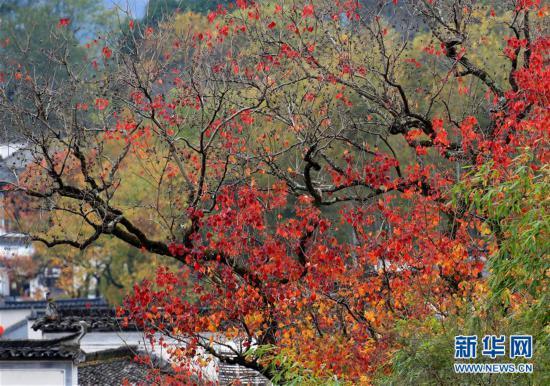 安徽黄山:塔川初冬景美如画