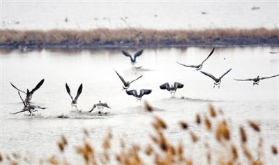 卧龙湖湿地 迎来大批候鸟