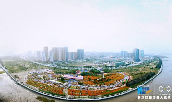 福建泉州:万菊争艳游人如织
