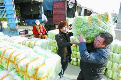 北京大白菜价格降至近5年最低批发价0.2元-0.25元/斤--财经--人民网