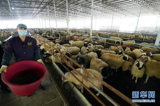 (社会)(1)江西萍乡安源区:扶贫抓产业 产业带农户
