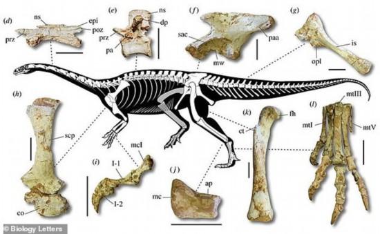 巴西发现新品种恐龙化石
