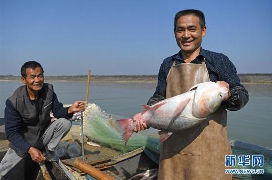 (社会)(1)鄱阳湖:人欢鱼跃冬捕忙