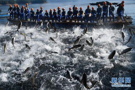 (社会)(1)浙江千岛湖:巨网捕鱼