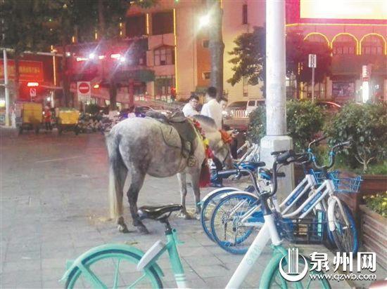 """怪""""驴""""现市区 市民担心其冲撞行人"""