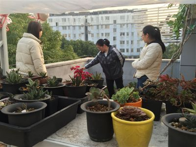 """靖江江阳社区有个""""空中花园"""" 社区共享共管"""