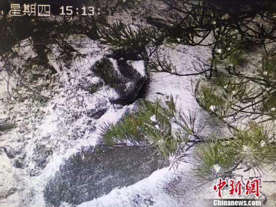 """强冷空气""""突袭""""浙江杭州迎今冬初雪(图)"""