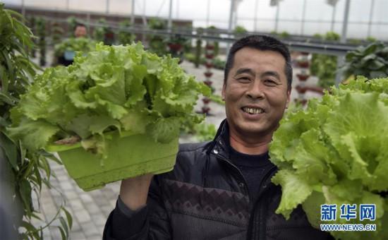 (经济)(1)陕西华州:发展特色农业促增收