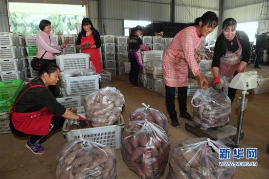 福建福清:土地流转 助农增收