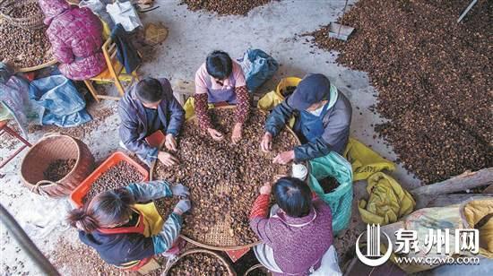 德化:茶油飘香时 村民喜开颜