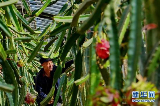 (经济)(1)设施农业变冬闲为冬忙