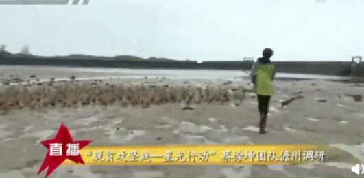 粉丝把鸭蛋买脱销 蔡徐坤回应:没想到她们这么能吃