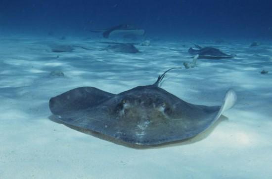 《海王》里撑起半边天的海洋生物