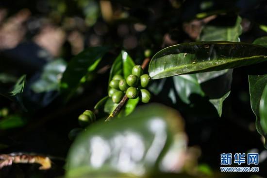 """哥斯達黎加——中美洲的""""咖啡王國"""""""