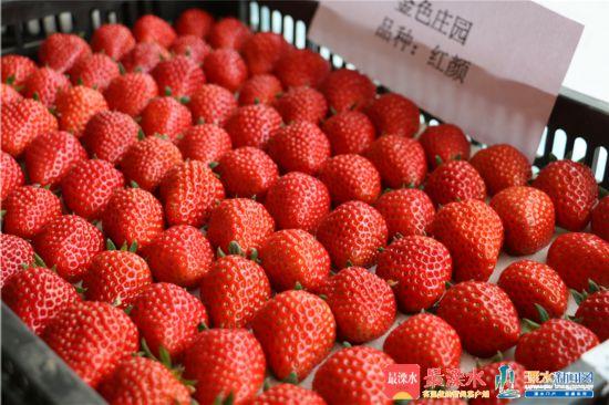 南京溧水打造草莓产业发展样本 建设示范区